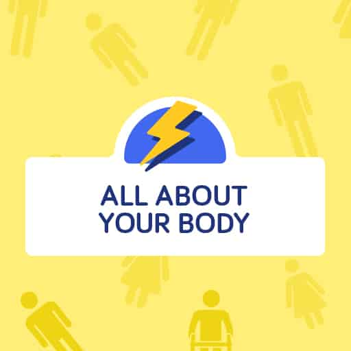 All About Your Body flashcards